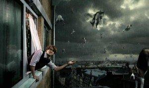 pluie de chats